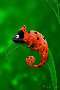 vladstudio_ladybug_and_chameleon_320x480